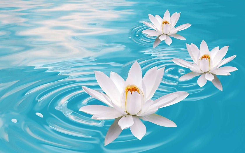 awesome-lotus-flower-wallpaper